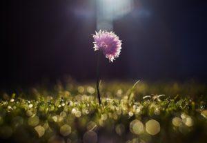 Spring Awakening - Debra Silverman Astrology